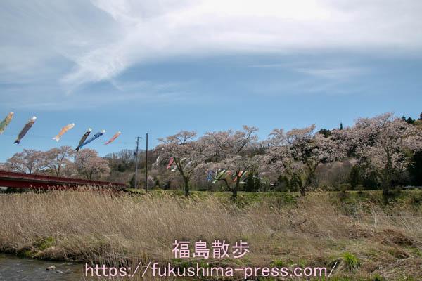 夏井千本桜遊歩道の画像