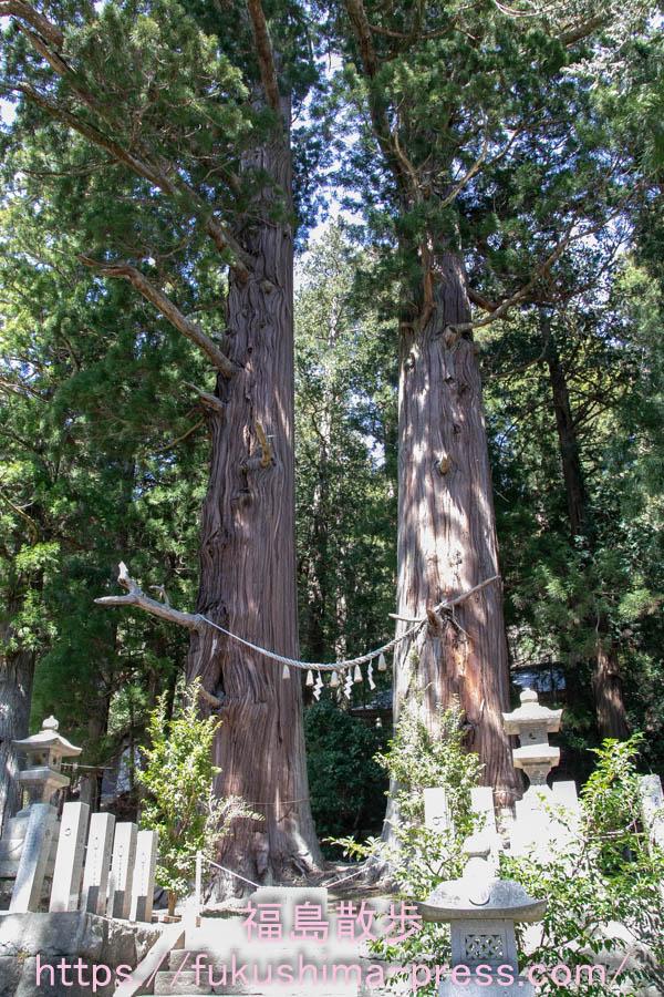 諏訪神社の翁スギと媼スギの画像